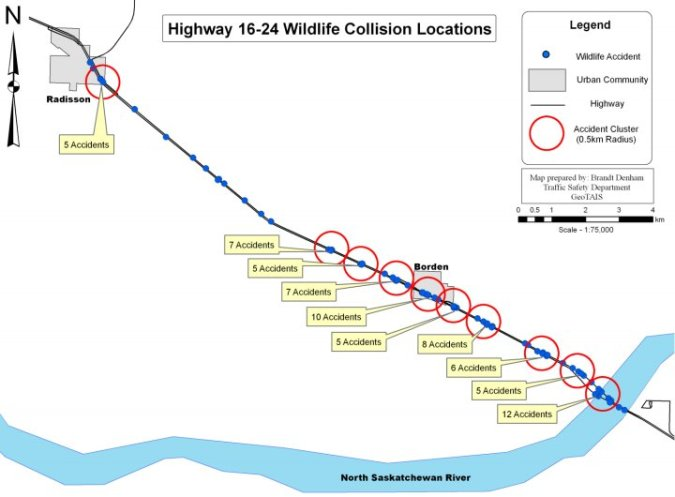 Actual Wildlife Accident Locations on Highway 16, Control Section 24