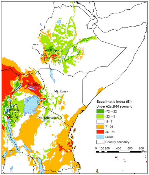 Distribution of the coffee berry borer (Hypothenemus hampei) illustrating species range shifts in Eastern Africa under climate change scenario A2A*.