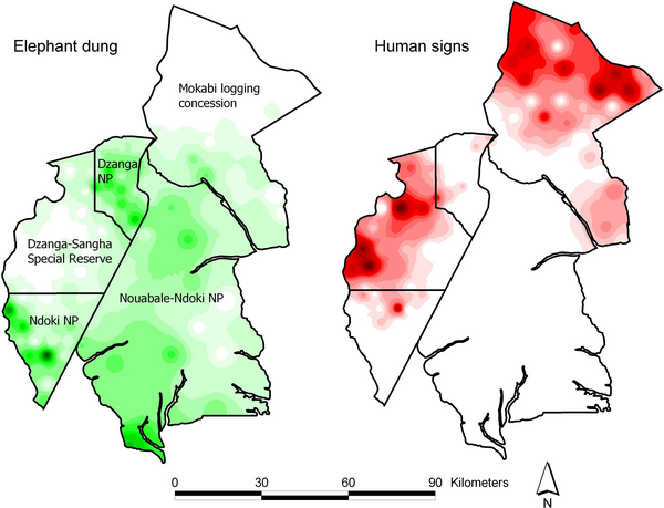Interpolated Elephant Dung Count and Human-Sign Frequency across the Ndoki-Dzanga MIKE Site