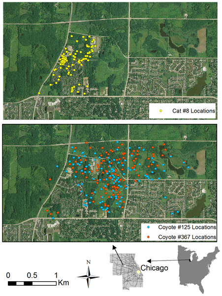 Spatial overlaps between cats and coyotes using the same urban park